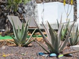 Villa Aloe garden gomera rent