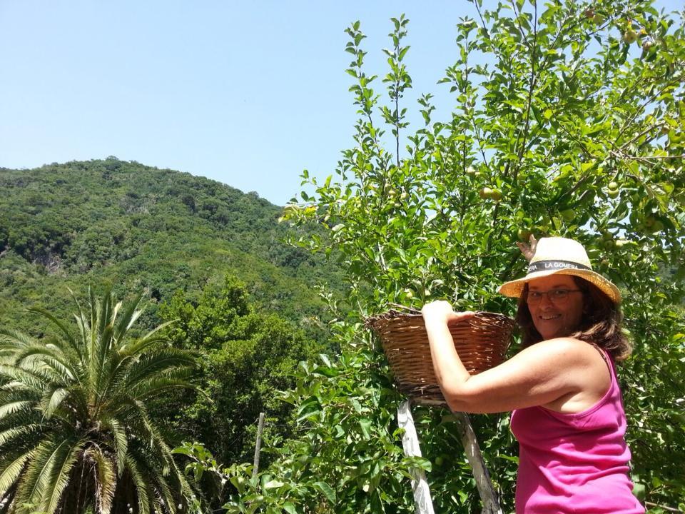 Recogiendo manzanas en El Cedro